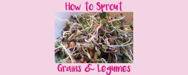 How to Sprout Grains and Legumes