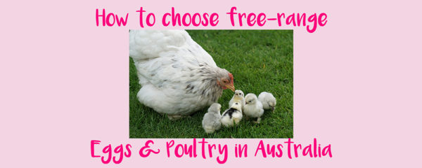 How to choose Free-Range Eggs and Poultry in Australia